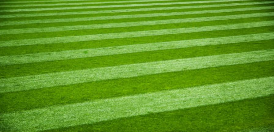 how to get a nice thick green lawn