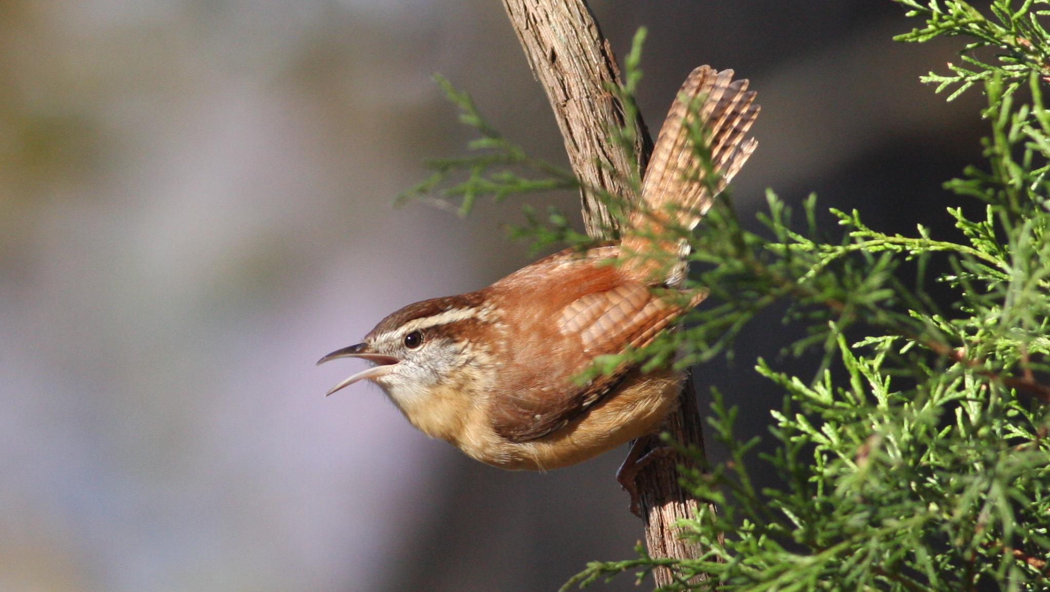 wild bird supplies u2013 blackhawk hardware