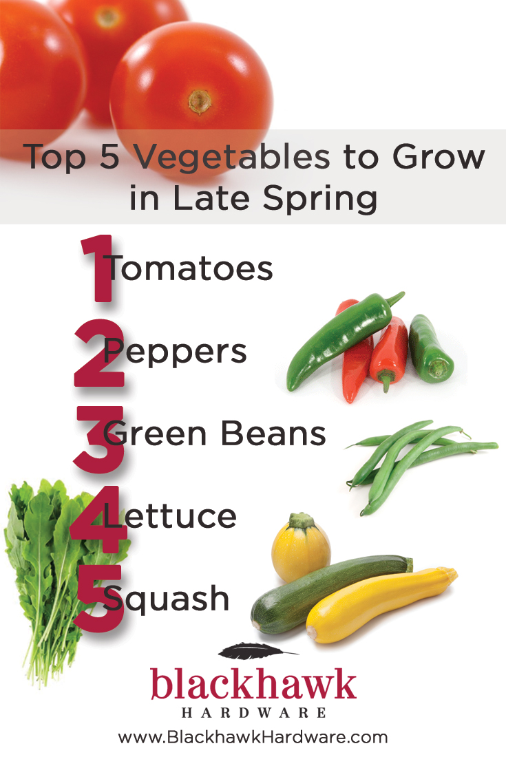 Blackhawk Top 5 Vegetables To Grow In Late