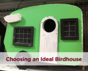 finding-the-ideal-birdhouse-w