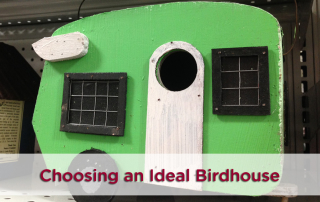 Finding The Ideal Birdhouse