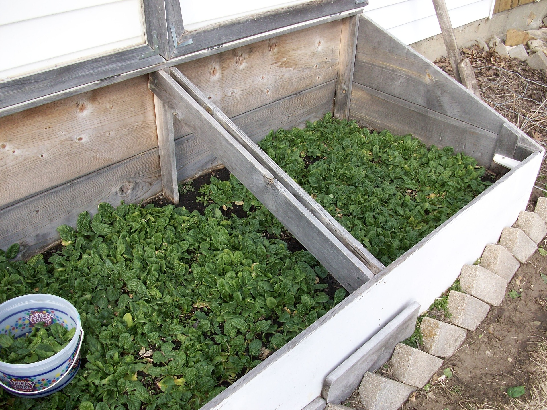 When should you start planting vegetables in north carolina blackhawk hardware for North carolina vegetable gardening