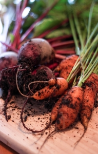 Carrots and beets are some of the vegetables you can still plant now in the Carolinas