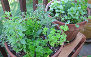 Why you should grow herbs in your garden, kitchen or on your patio.