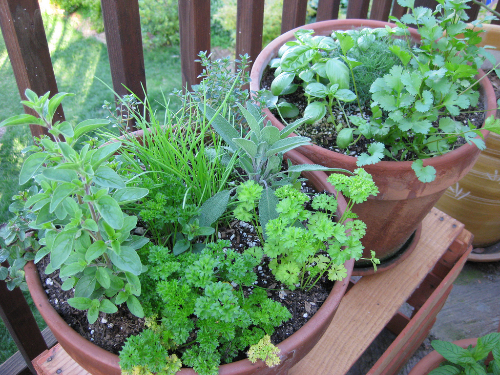 7 reasons why you need an herb garden blackhawk hardware - Cultivar plantas aromaticas ...