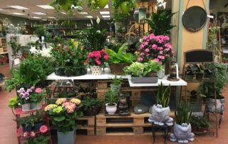 The best garden center to buy houseplants / indoor plants in Charlotte, NC: Blackhawk Hardware!
