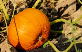 October gardening to do list for Charlotte, NC