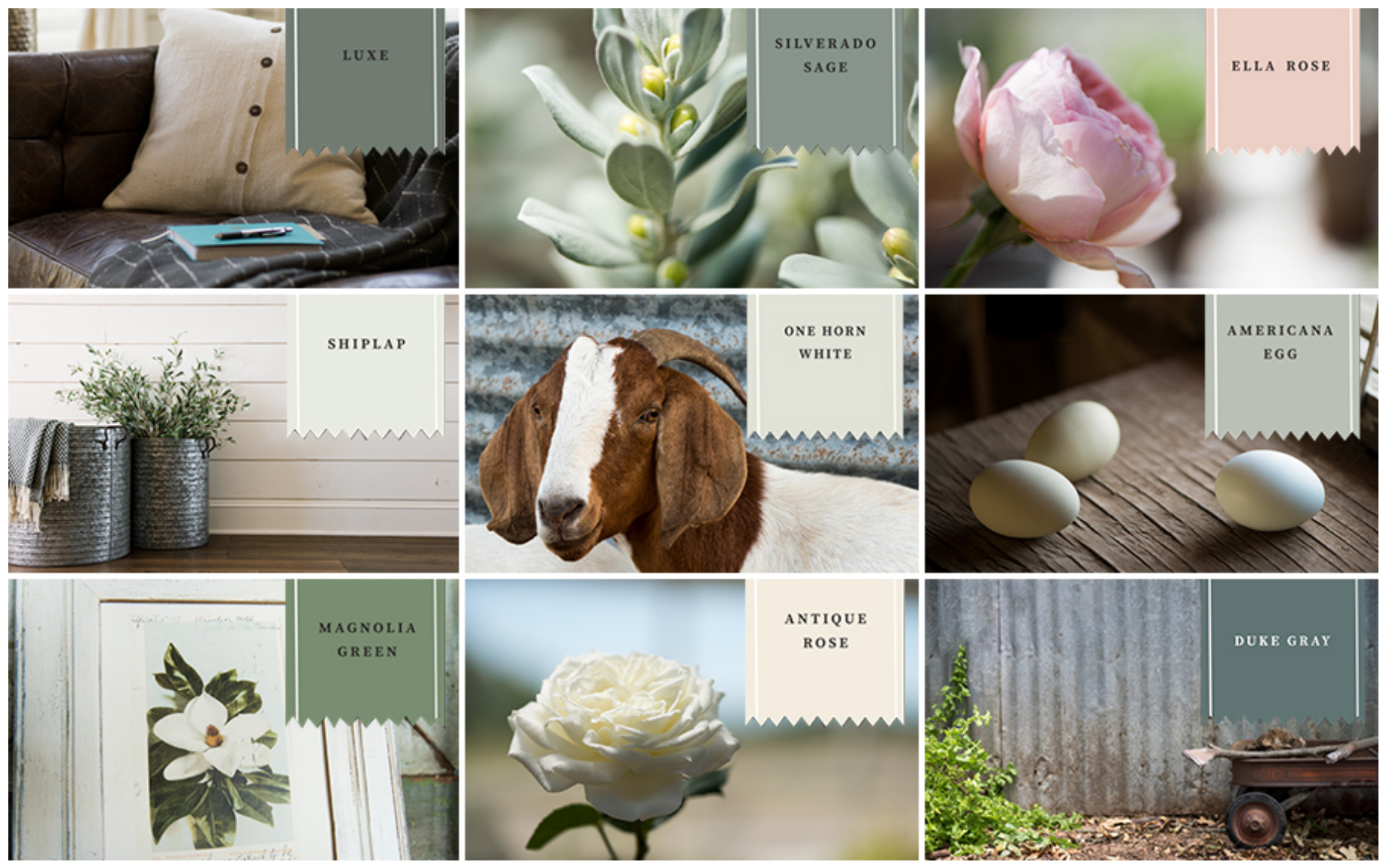 Magnolia Paint by Joanna Gaies now available at Blackhawk Hardware