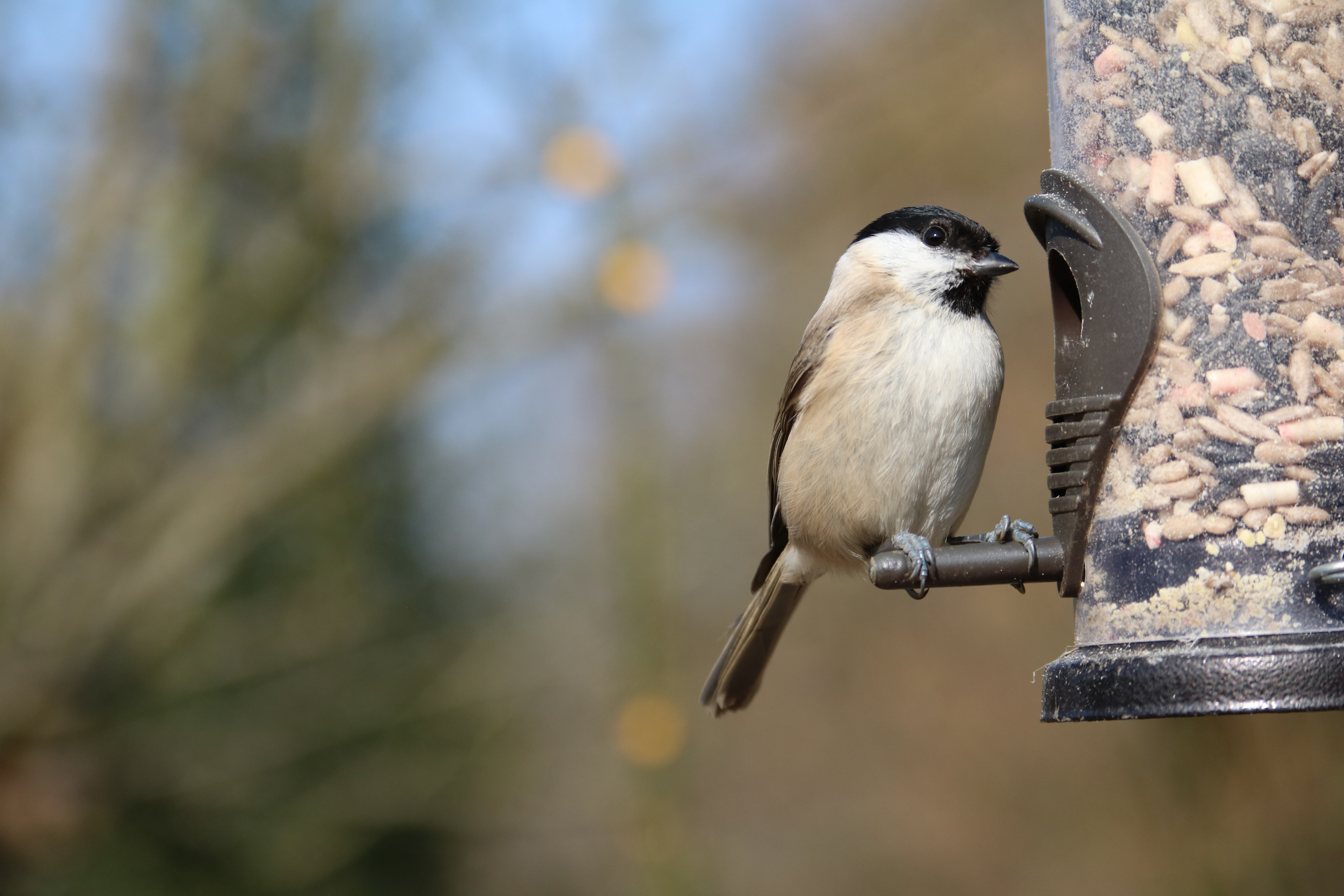 Don't forget to feed the birds this winter!