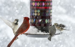 Don't forget your birds this winter!