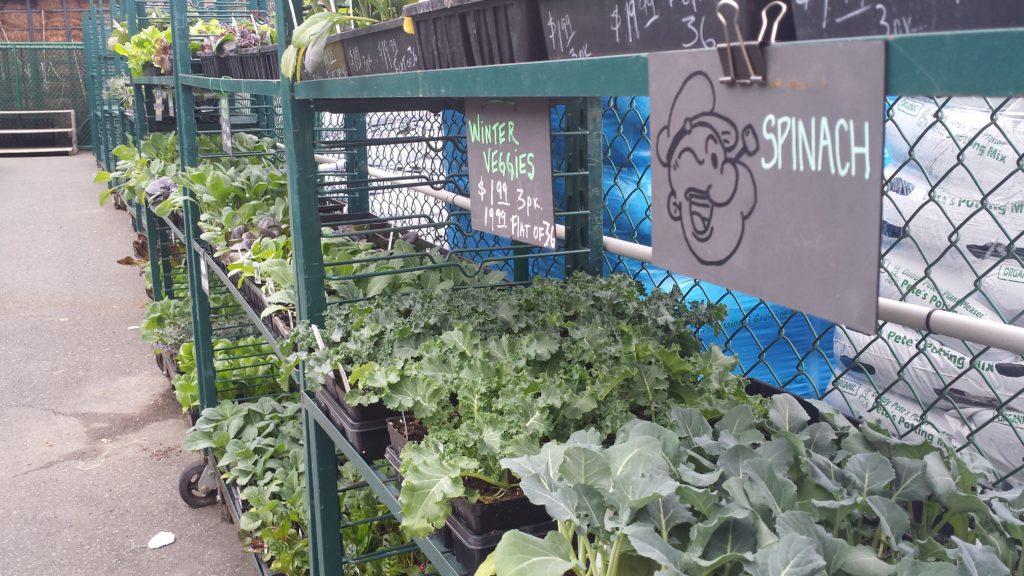 Winter veggies are in stock!