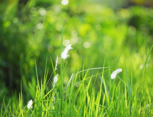 Favorite Tools for Spring Lawn and Garden Care