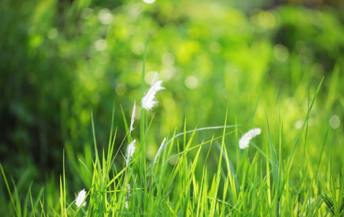Our favorite tools for spring lawn and garden care
