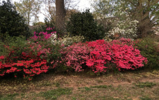 Here is your April gardening to do list for Charlotte, NC