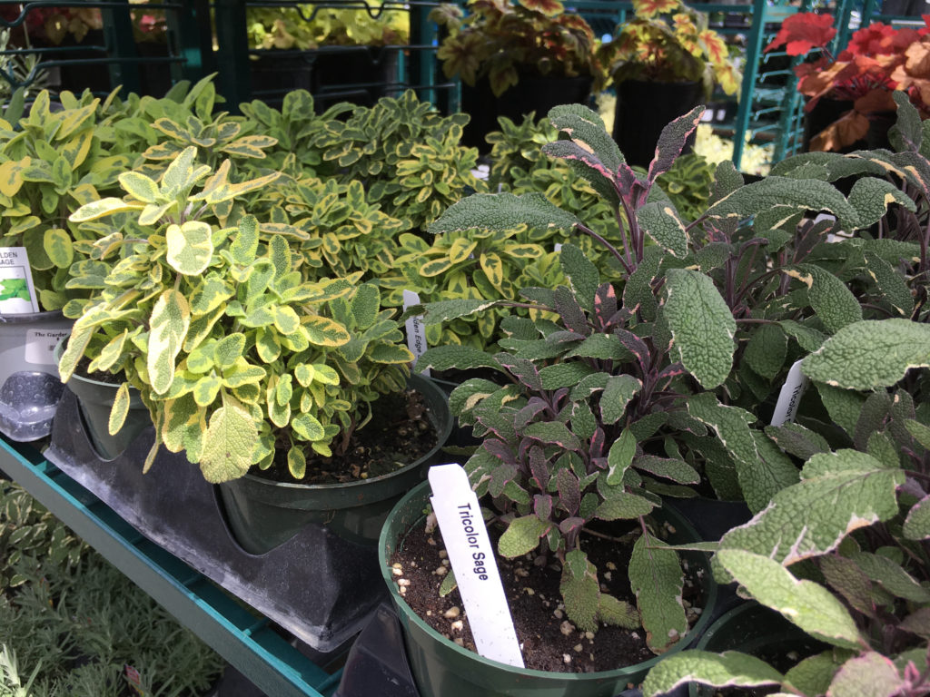 Time for fresh herbs from your garden!