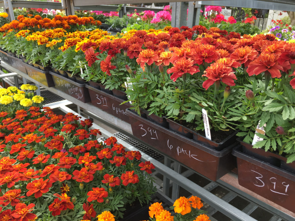 A sea of marigolds is available at Blackhawk Hardware right now!
