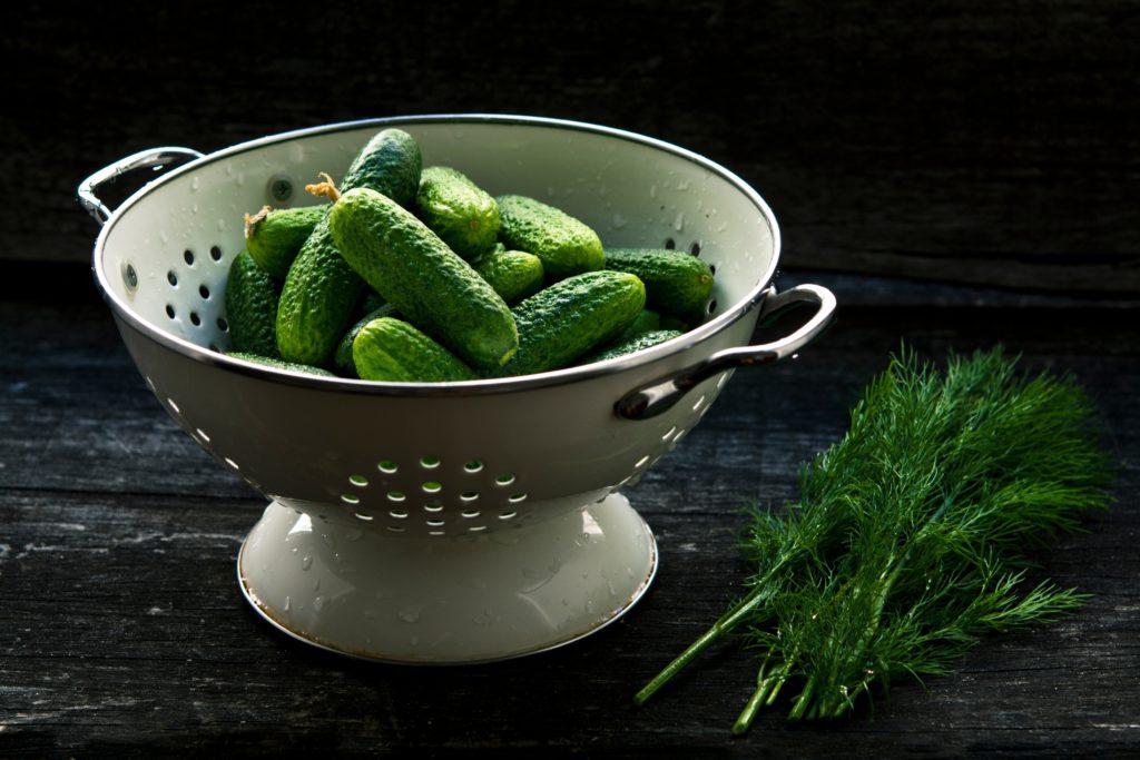 Growing cucumbers in the Carolinas
