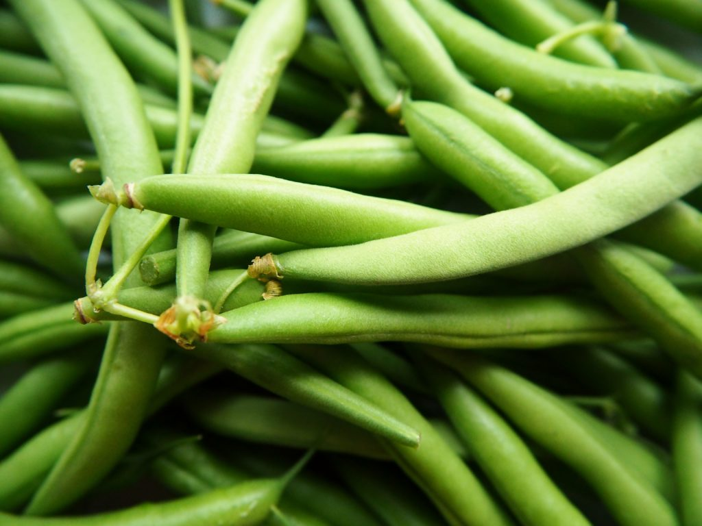 Growing green beans in the Carolinas