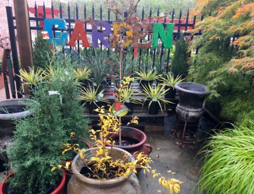 Fall Trees and Bushes at Blackhawk's Garden Center