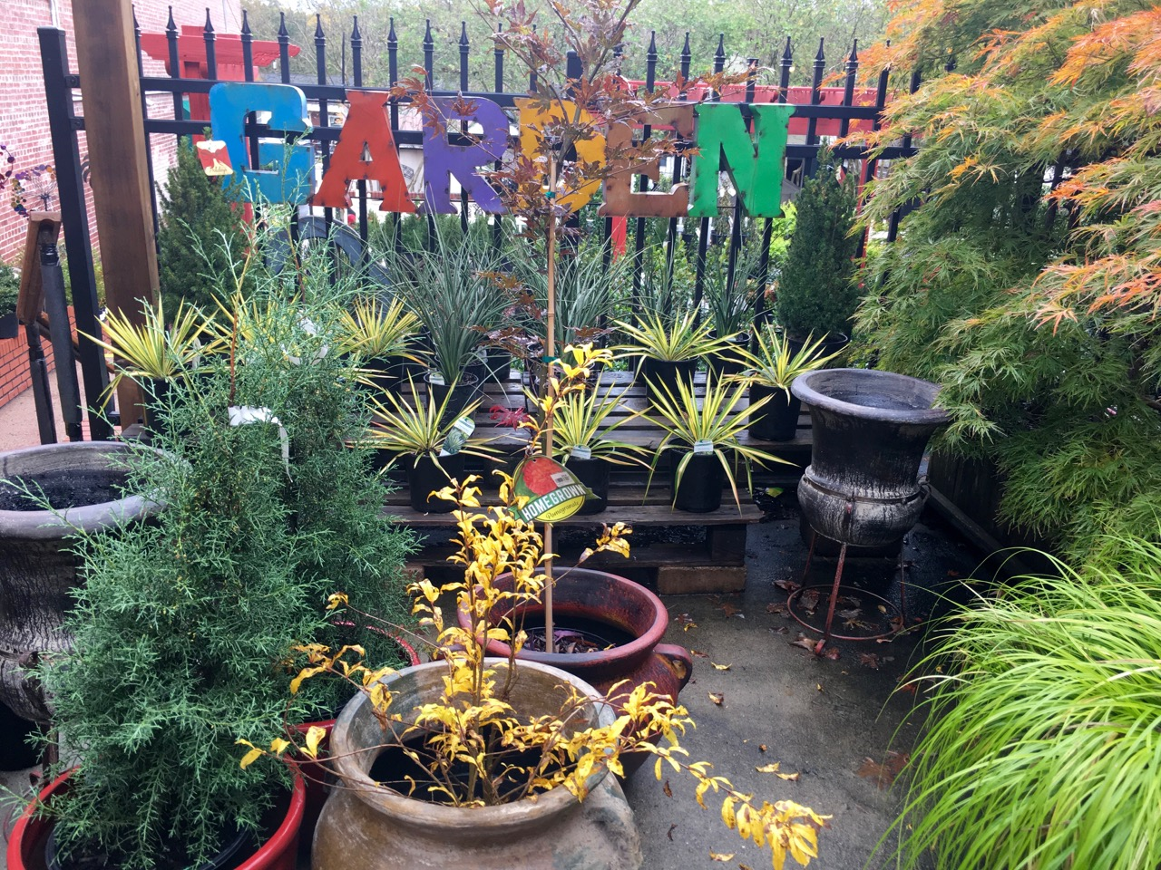Fall Plants at Blackhawk Hardware Garden Center
