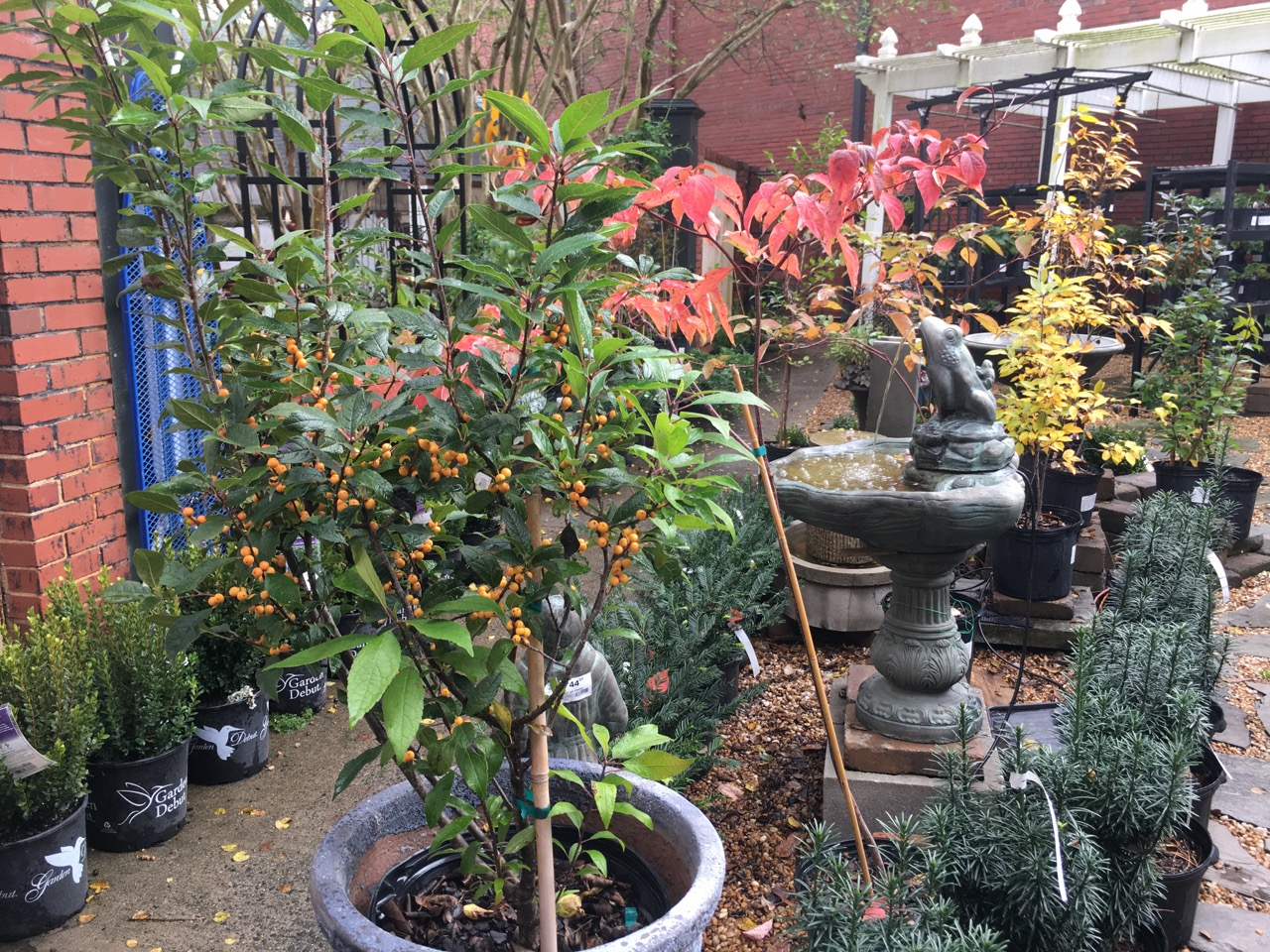 Fall bushes and trees at Blackhawks Garden Center